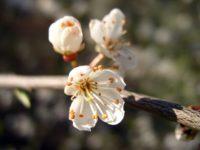 flower-49545_640